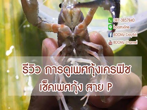 รีวิว การดูเพศกุ้งเครฟิช [Make is Me] by BOOMz Crayfish EP.29