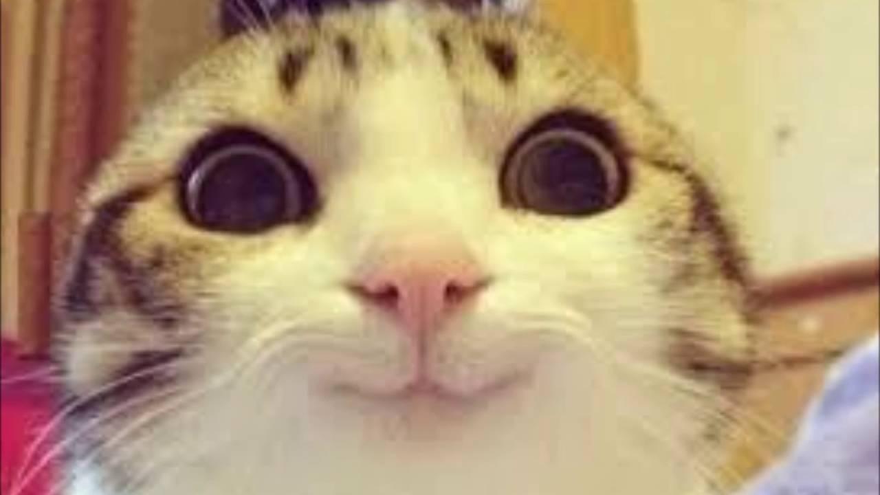 かわいい猫 萌えるねこ 癒し系ネコの特集 Youtube