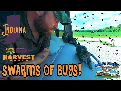 Star Trek Location, Bicycle Tour, Brewery Camping & SWARMS of Cicadas In Indiana thumbnail