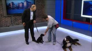 Global Morning News - Puppy Training