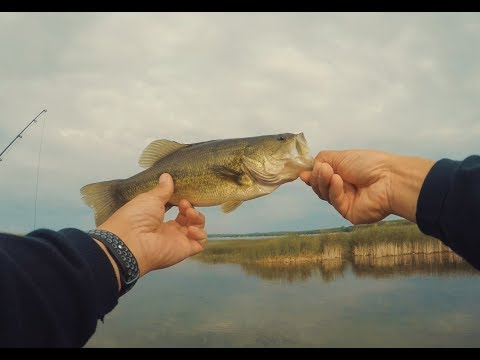Bass Fishing In Spicer, MN On Green Lake