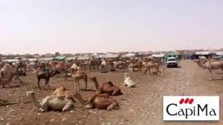 Capisa en Mauritanie: CapiMa