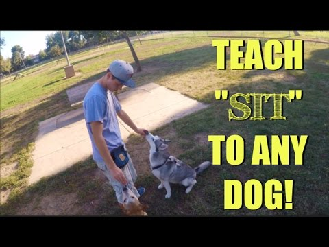 TEACH 'SIT' TO ANY DOG! ft. Pawfessor