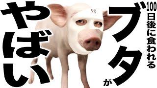 YouTube史上最悪の物議 ペットだった豚を食べて大炎上の100日後に食われるブタさんの歌