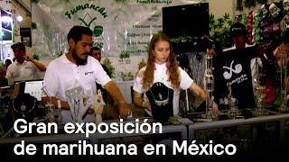 Exposición de marihuana en México - CDMX - En Punto con Denise Maerker thumbnail