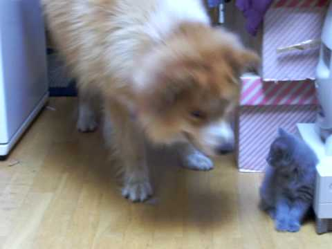 DOG & KITTYCATS - KOIRA JA KISSANPENNUT 2009 SUOMI FINLAND VIRRAT