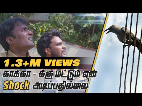 Why don't electric wires shock birds?   Tamil   LMES