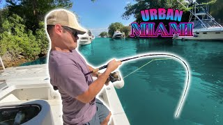 INSANE Urban Canal Fishing in Miami's HIDDEN Locations!