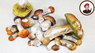 Соленые белые грибы по рецепту от Деда. Георгий Апухтин