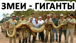 Змеи - гиганты (такого вы еще не видели) - Документальный фильм