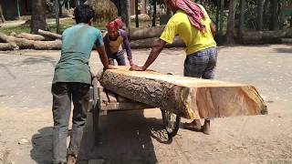 "5"" Rain Tree Slice Wood Cutting by Wood Sawmill Machine/ Fast Wood Cutting Chainsaw Machine Working"