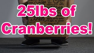 25 Lbs of Cranberries!!!!!