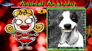 Animal Anarchy-  what animals really thinki!