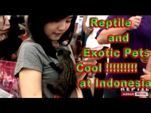 [HD] Reptile Expo & Exotic Pets Invasion 2013 Jakarta Indonesia