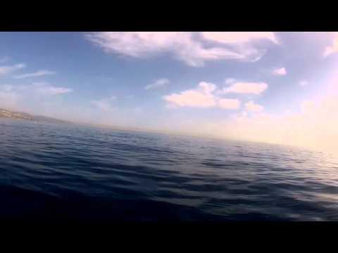Delfines (ALPHA X - Nocturnal Trip)