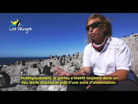 Argentine, Patagonie, Puerto Deseado, île Pinguino, interview biologue Chantal TORLACHI