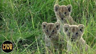 safariLIVE - Sunrise Safari - January 30, 2019
