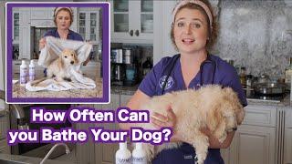 How Often Can I Wash my Dog? | Zymox Puppy Bath