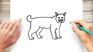 How to Draw a Bobcat Step by Step for Kids