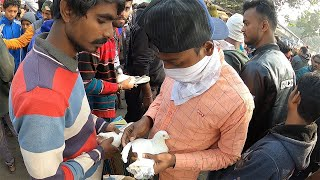 Kolkata SUNDAY PET MARKET | ILLEGAL exotic pet market