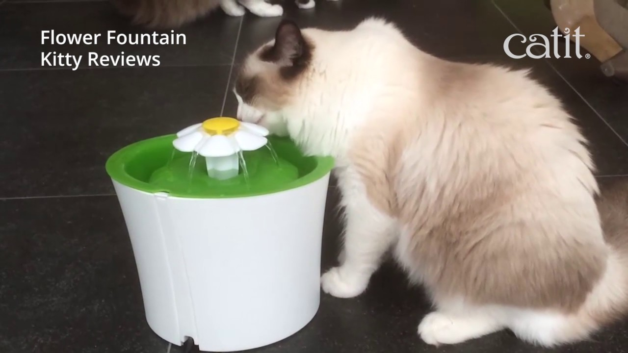 filtre pour fontaine flower cat it 3 l