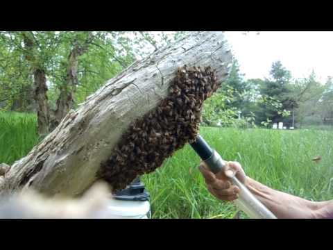 Swarm Capture with a Vaccum - Fixed...