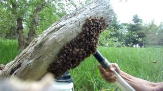 Swarm Capture with a Vaccum - Fixed... thumbnail
