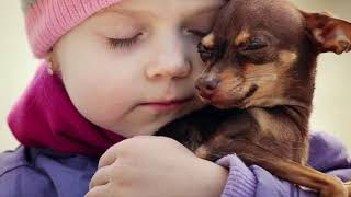 Выбор собаки! Порода собаки Чихуахуа. Для детей школьного возраста