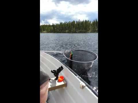 Gjeddesnipe på gang på Vurrusjøen Norway! Pike fishing av Kameramann Stein Tore Enger