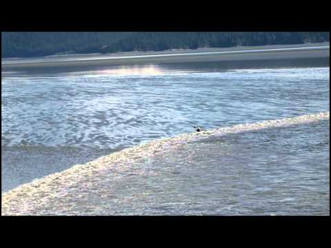 Surfing tidal bore in Alaska (Cook Inlet-Turnagain Arm)