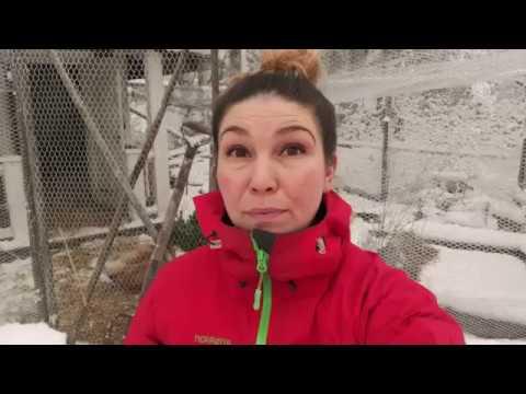 Självhushåll 5 grödor som borde vara en självklarhet att odla Jessica listar