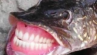 Приколы неудачи невероятные уловы и необычные случаи на рыбалке