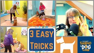 3 Easy Tricks Every Dog Should Know #68