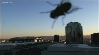 The 'fly' over Downtown Phoenix