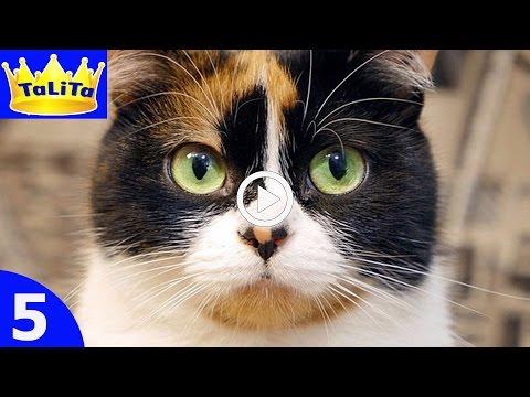 кошки усы фото