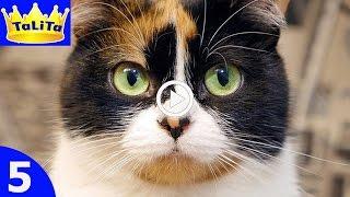 Кошки Королевские куклы. Супер кот, Видео про кошек. Видео куклы друзья куклы монстер и куклы хай