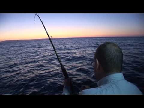 Gummy Shark Fishing Port Phillip Bay