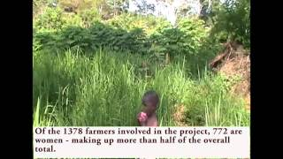 Growing beans, peanuts and rice in Central Uganda, Nov 11