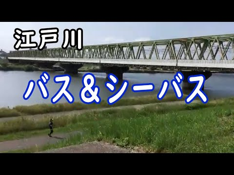 江戸川で釣り!バス&シーバス