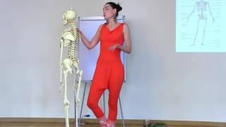 2. Об Анатомии
