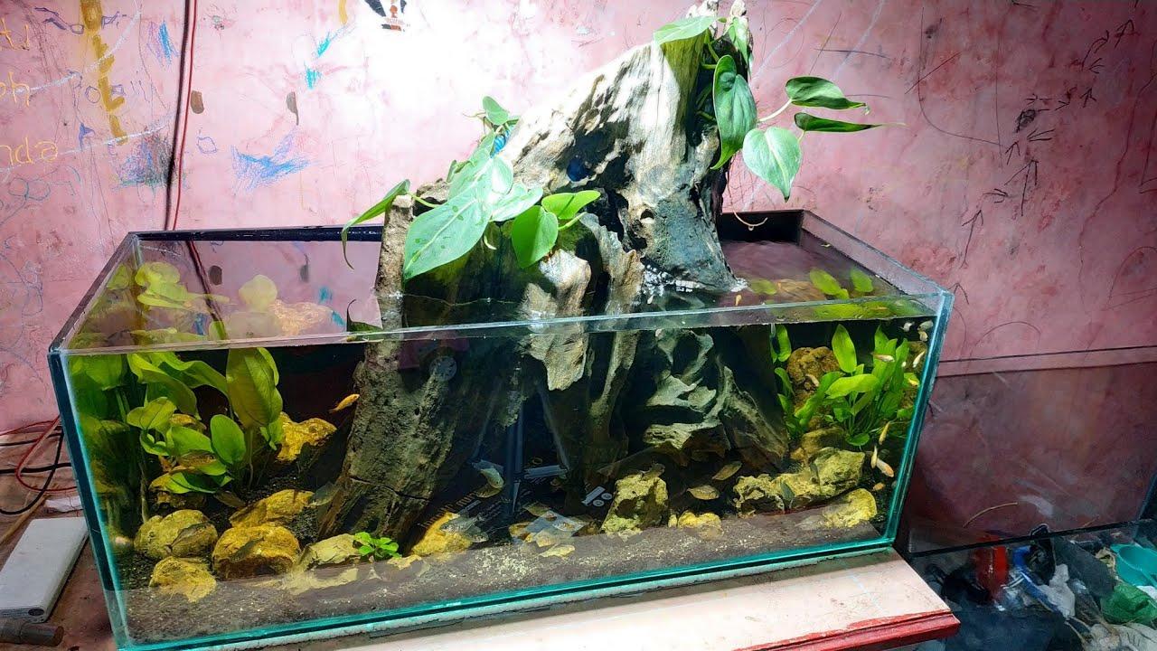 77 Membuat Aquarium Untuk Ikan Piranha Youtube