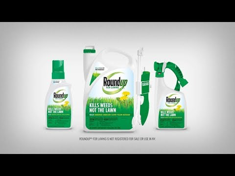 How to Use Roundup® For Northern Lawns Products Properly to Kill Weeds in Your Lawn