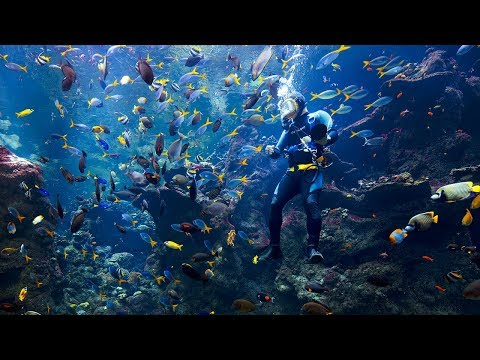 Live Coral Reef Cam | California Academy of Sciences