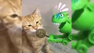 Cute Funny and Smart Cats Compilation - Animals Video 2020 | Tricksy Pets