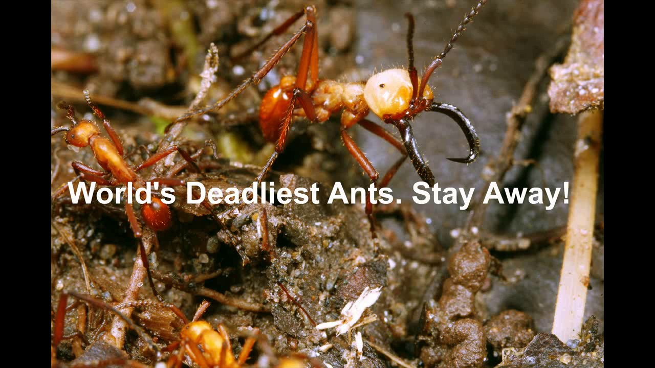how to drive away ants
