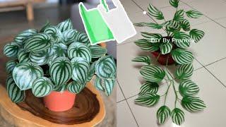 DIY Peperomia Semangka dari Plastik Kresek | Peperomia Watermelon From Plastic Bag