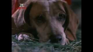 "Kathy Fisher - ""There's A Place"" (""Rusty: A Dog's Tale"" OST)"