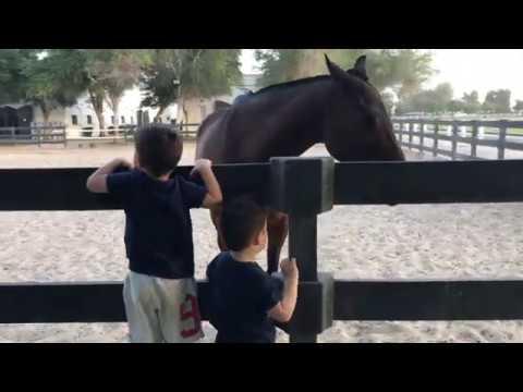 Polo & Equestrian Club | Fun with kids | Where to go in Dubai
