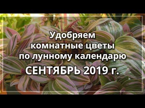 Сентябрь 2019 г. | Лунный календарь подкормки комнатных цветов