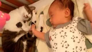 赤ちゃん好きなねこ2 しっぽでトントン~
